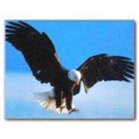 SOARING EAGLE----------ABOUT US THE GOSPEL